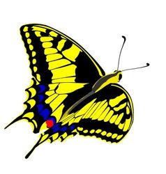 Machaon butterfly vector