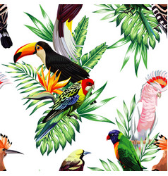 parrot maccaw and toucan on branch vector image