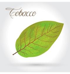 tobacco leaf icon vector image