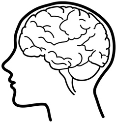 Human profile with visible brain vector image vector image