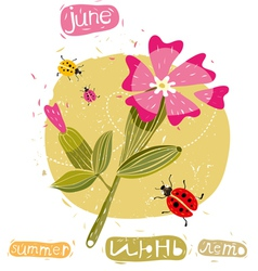 summer flowers and bugs vector image vector image