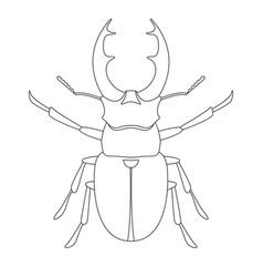 Deer beetle lining draw front vector