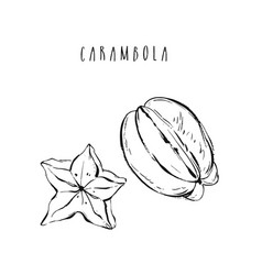 Hand drawn abstract exotic tropical fruit vector