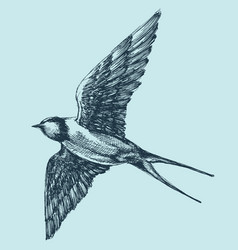 Swallow in flight detailed hand drawing vector