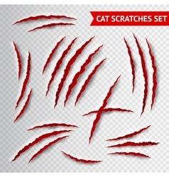 Cat scratches transparent vector image