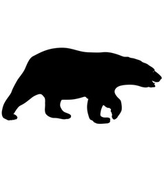 silhouette polar bear on a white background vector image vector image
