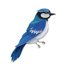 Blue jay as warm-blooded vertebrates or aves with vector