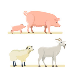 Cute funny sheep goat pink pig isolated vector