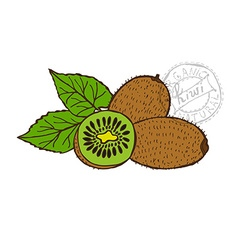 hand drawn fruits vector image