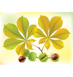 Autumn chestnuts and leaves vector