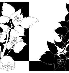 Black and white background with flowering apple vector image