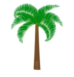 Green palm on a white background vector image