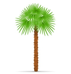 Palm tree 01 vector