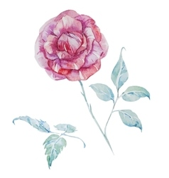 Watercolor roses vector