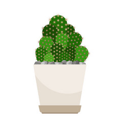 cactus house plant in white flower pot vector image