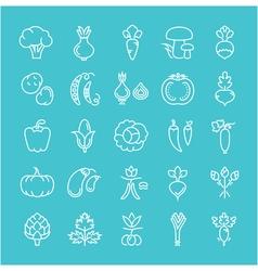 Set Flat Line Icons Vegetables vector image