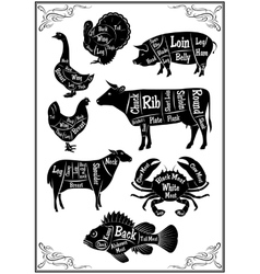 set of diagrams of sections of different animals vector image vector image