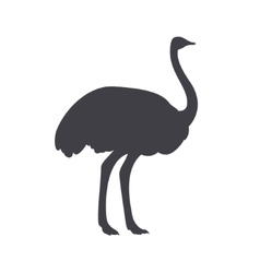 Black ostrich isolated on a white background vector