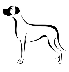 Dog great dane vector