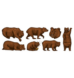 Grizzly bear set collection hunting brown wild vector