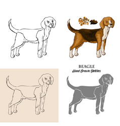 Hand drawn beagle dogs sketches vector