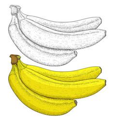 banana hand drawn sketch vector image