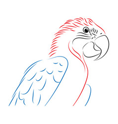 colorful of parrot vector image