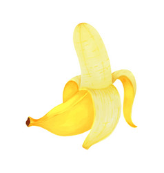 hand drawn markers painting fruit banana on white vector image