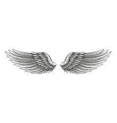 hand drawn wings vector image