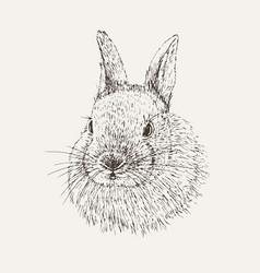Rabbit sketch hand drawn vector