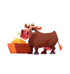 Rural cow eating hay hungry farm cartoon animal vector