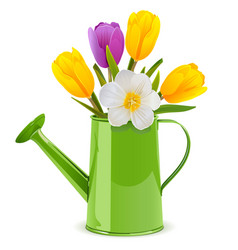 Watering can with tulips vector
