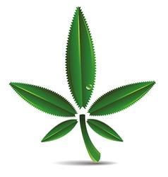 Hemp leaf vector