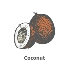 Hand-drawn brown ripe coco vector
