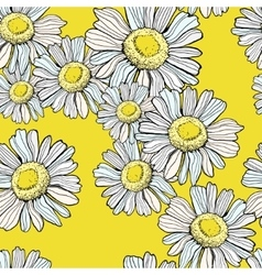 Beautiful chamomile pattern vector image vector image