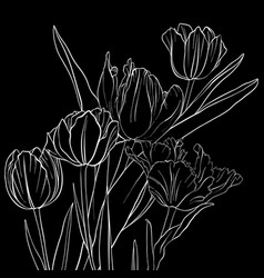 Drawing flowers of tulip vector