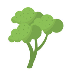 broccoli vegetable diet nutrition vector image