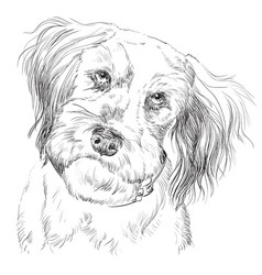 Fluffy dog hand drawing portrait vector
