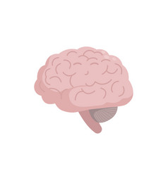 healthy brain icon isolated on white background vector image