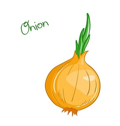 isolated cartoon fresh hand drawn onion vector image
