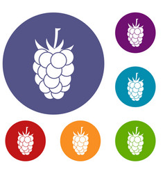 blackberry fruit icons set vector image