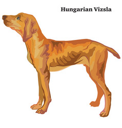 Colored decorative standing portrait of hungarian vector