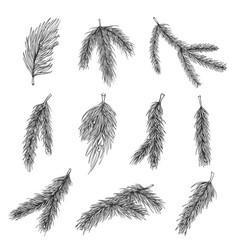fir tree branches hand drawn set vector image