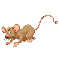 Little mouse with silly face vector