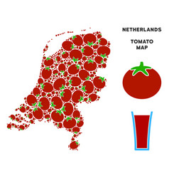 netherlands map composition of tomato vector image