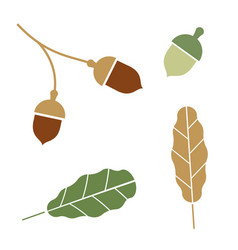 oak branch isolated acorns on white background vector image