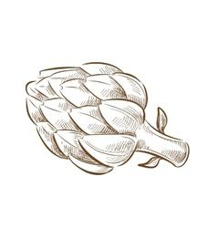 Picture artichoke vector