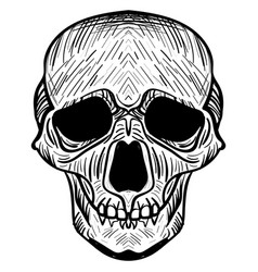 The image of the skull vector