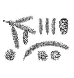 christmas tree branch sketch vector image