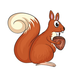A squirrel vector image